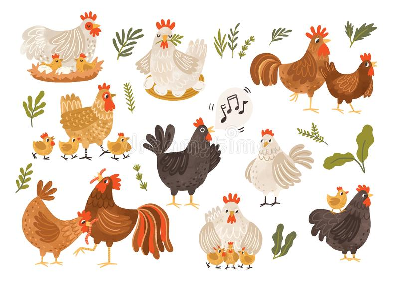 在白色背景和小鸡的隔绝的汇集雄鸡、母鸡 捆绑与巢的鸡 逗人喜爱的可爱的家庭  向量例证