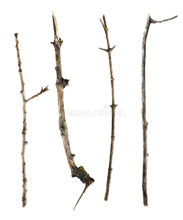 在白色背景和枝杈隔绝的棍子 免版税库存照片
