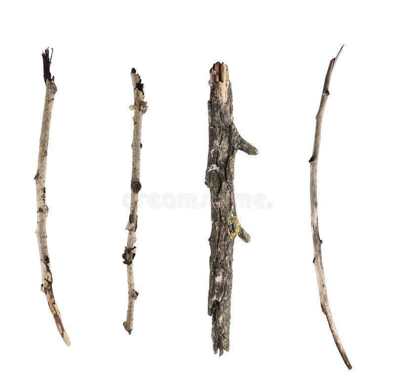 在白色背景和枝杈隔绝的棍子 库存图片