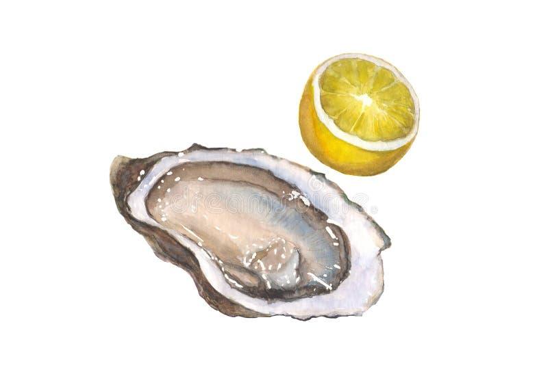 在白色背景和柠檬隔绝的水彩牡蛎 库存例证