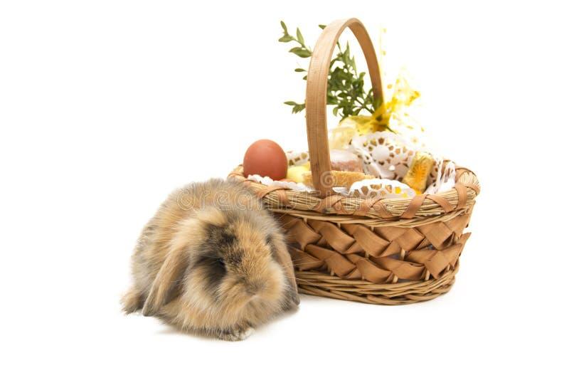 在白色背景和篮子隔绝的复活节兔子 库存图片