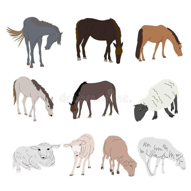 在白色背景和绵羊隔绝的设置马 向量例证