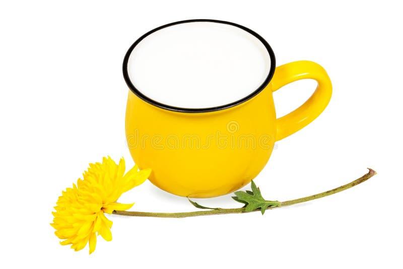 在白色背景和美丽的菊花花隔绝的大生动的黄色杯子牛奶 免版税库存照片