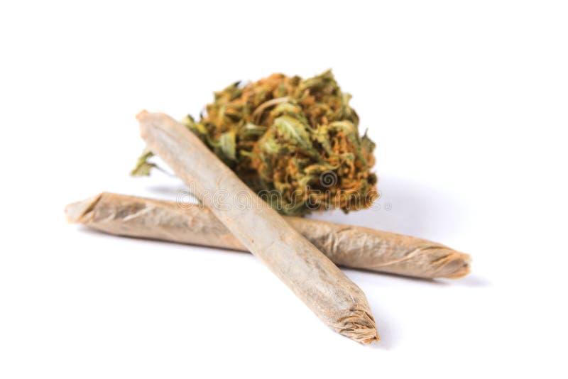 在白色背景和联接隔绝的大麻芽 免版税库存图片