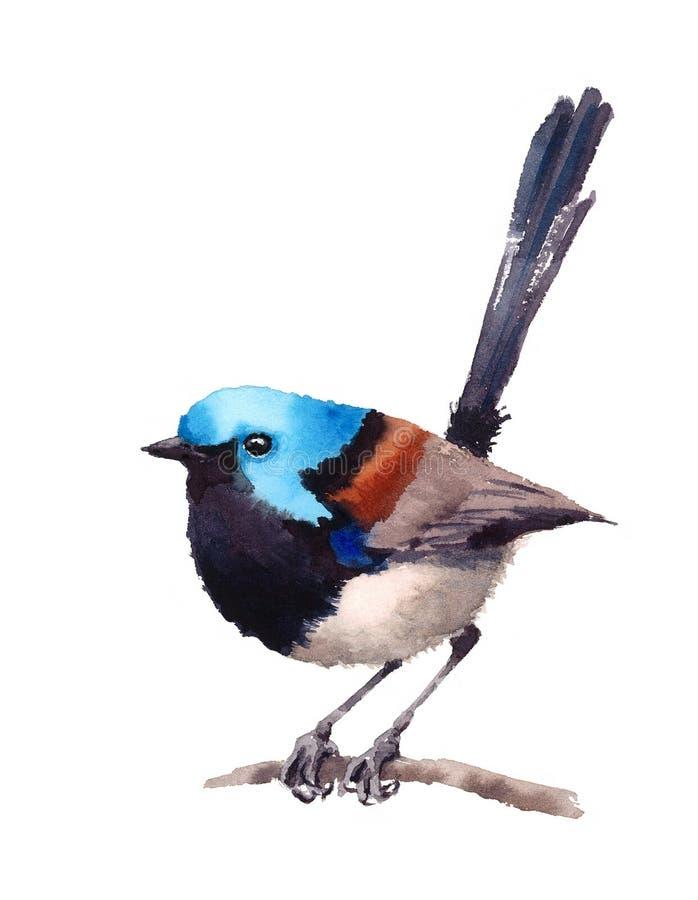 在白色背景在分支水彩例证手画的神仙的鹪鹩鸟隔绝的 向量例证
