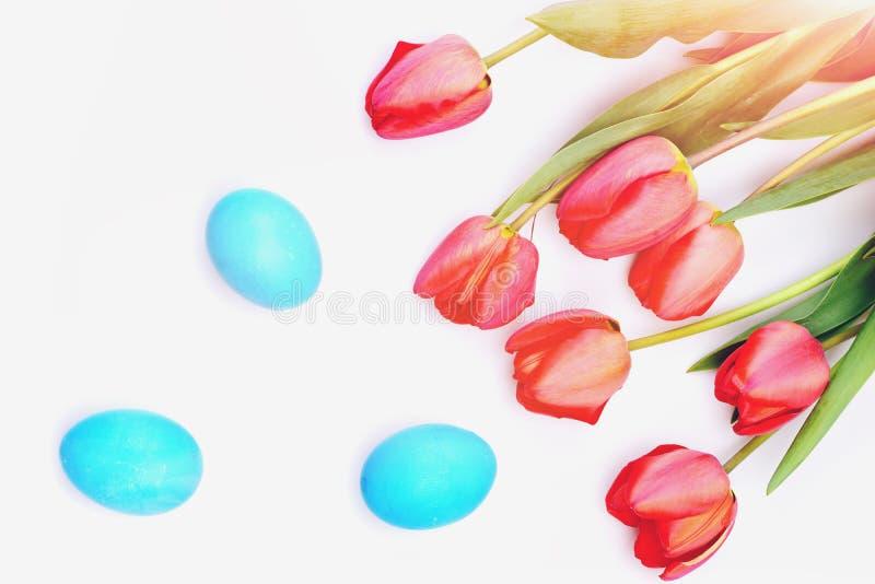 在白色背景在桃红色或红颜色的郁金香隔绝的 免版税库存照片
