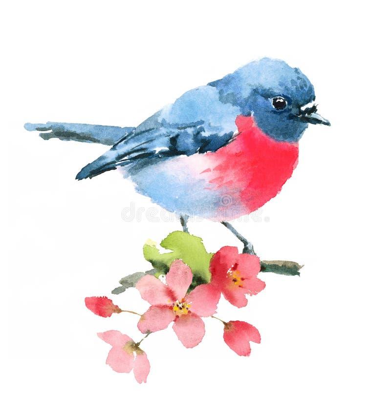 在白色背景在樱花分支水彩例证手画的桃红色罗宾鸟隔绝的 皇族释放例证
