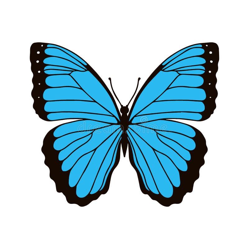 在白色背景在颜色的现实黑脉金斑蝶隔绝的 r 向量例证
