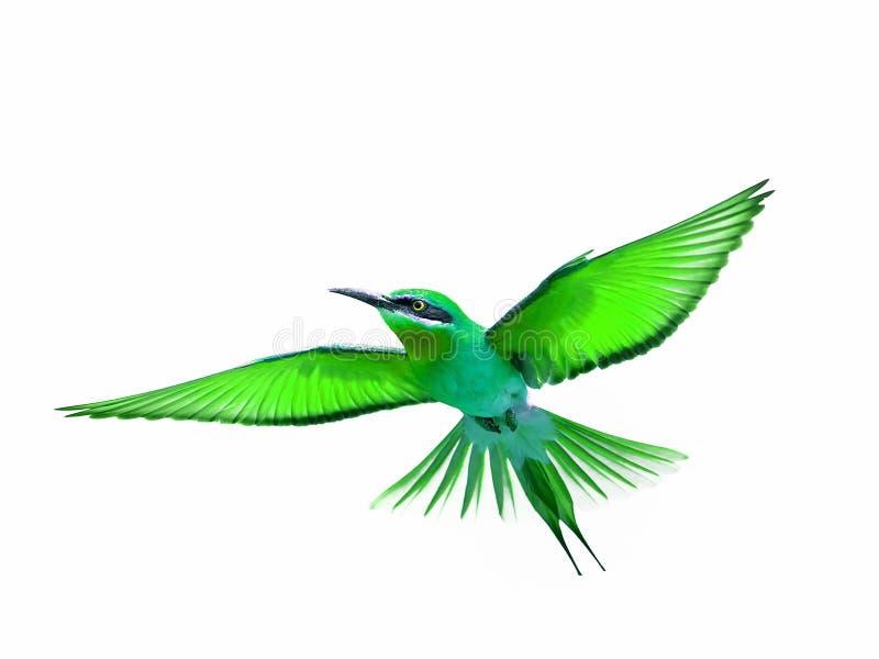 在白色背景在飞行中隔绝的鸟 免版税库存照片