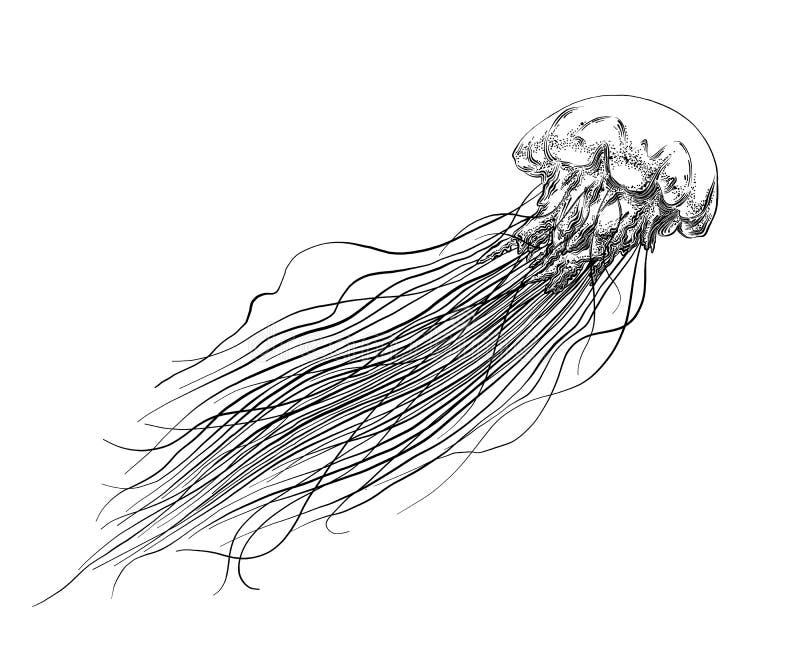 在白色背景在黑色的隔绝的水母手拉的剪影  详细的葡萄酒样式图画 向量 向量例证