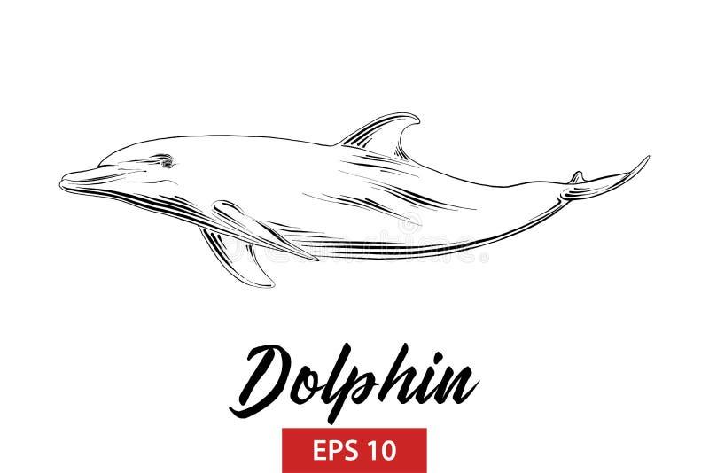在白色背景在黑色的隔绝的海豚手拉的剪影  详细的葡萄酒蚀刻样式图画 库存例证