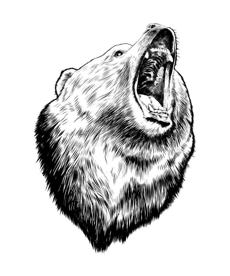 在白色背景在黑色的隔绝的熊手拉的剪影  详细的葡萄酒蚀刻样式图画 皇族释放例证