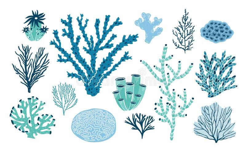 在白色背景或者海藻隔绝的捆绑各种各样的珊瑚和海草 套蓝色和绿色水下的种类 向量例证