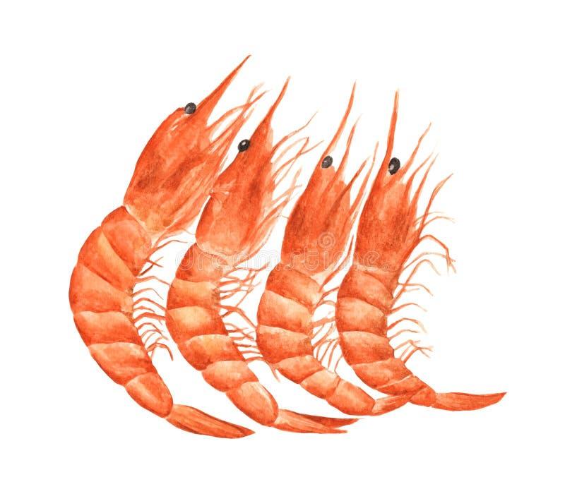 在白色背景或虾隔绝的红色大虾 r 库存例证
