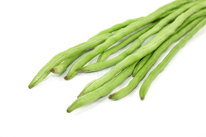 在白色背景或豇豆隔绝的长的豆 免版税库存照片