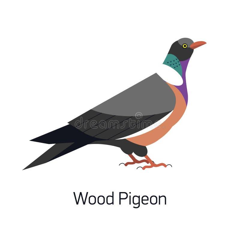 在白色背景或Culver隔绝的共同的斑尾林鸽 华美的森林鸟,森林地居民 逗人喜爱的小鸟 公开承认 皇族释放例证