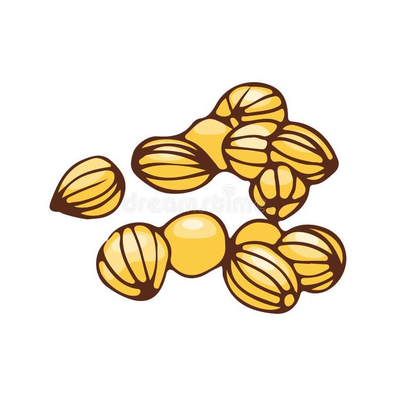 在白色背景有机香料调味品和手拉的食品成分芳香调味料隔绝的芫荽子 库存例证