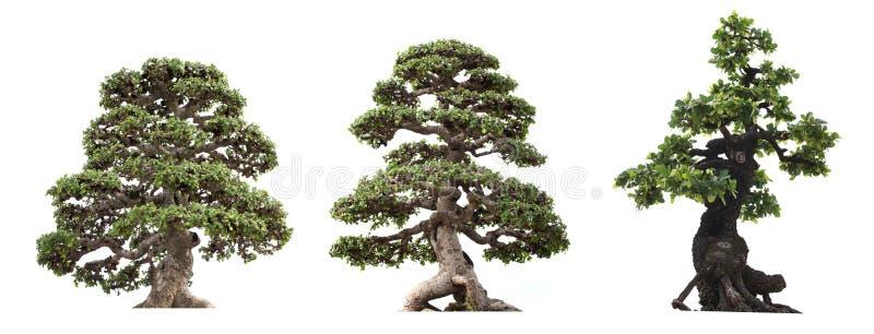 在白色背景树隔绝的小组 免版税库存图片