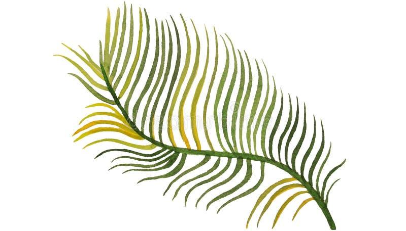 在白色背景水彩例证的棕榈叶 免版税库存图片