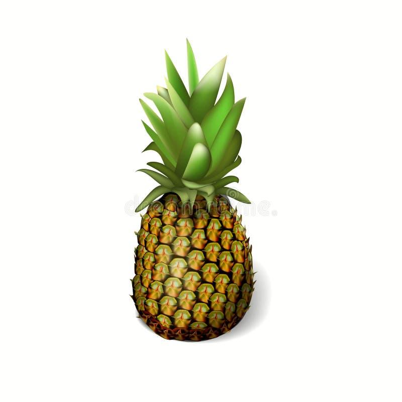 在白色背景的一个现实菠萝 也corel凹道例证向量 皇族释放例证