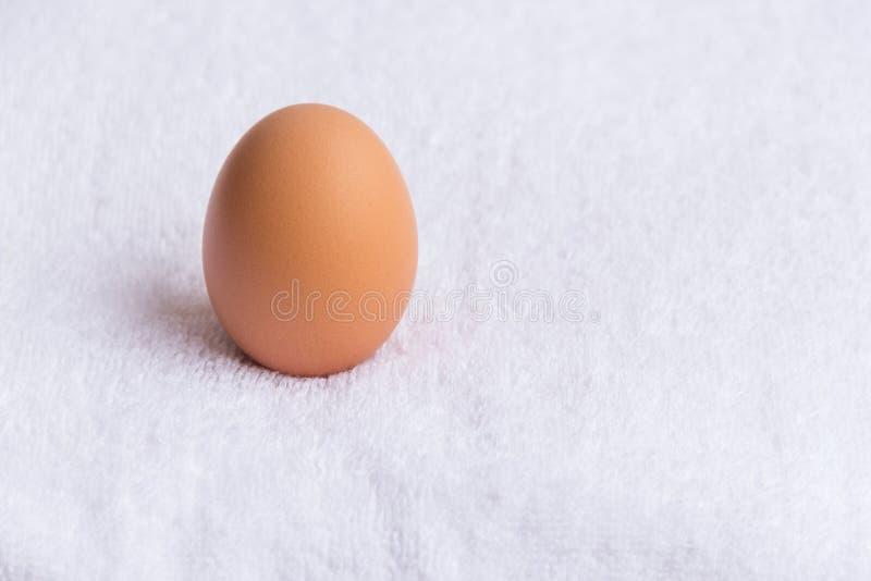 在白色背景的一个鸡鸡蛋 库存照片