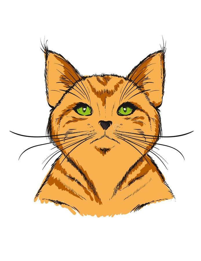 在白色背景的一只红色虎斑猫 向量例证