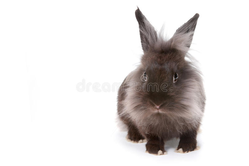 在白色背景的一小兔 图库摄影