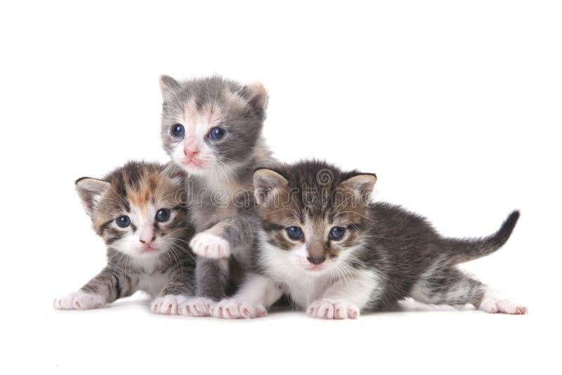 Download 在白色背景的三只小小猫 库存照片. 图片 包括有 背包, 讨人喜欢, 自然, 交配动物者, 宠物, 纵向 - 30329202