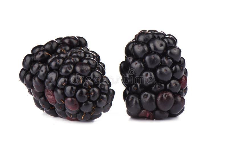 在白色背景的两个成熟黑莓 o 免版税图库摄影
