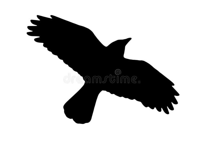 在白色背景的乌鸦剪影 皇族释放例证