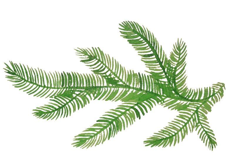 在白色背景的云杉的分支绘与水彩 库存照片