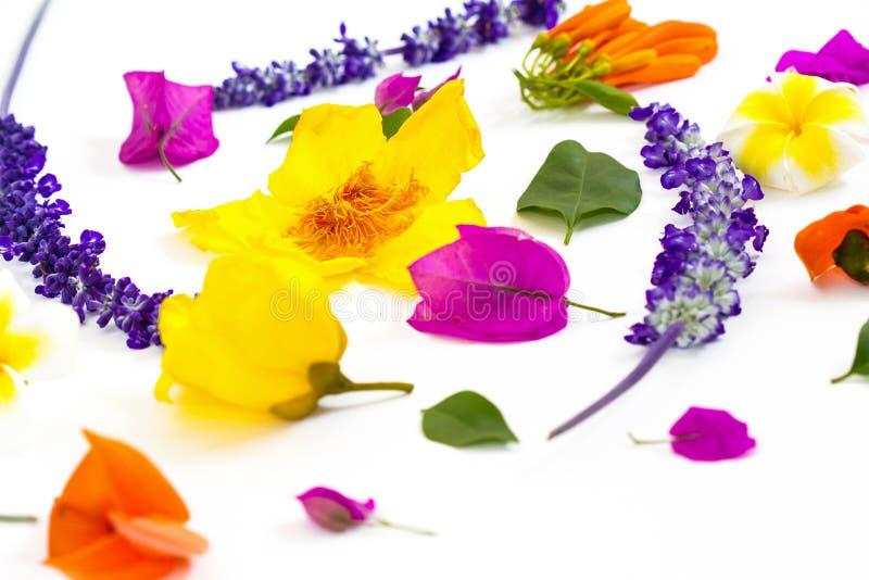 在白色背景的五颜六色的花 免版税库存图片