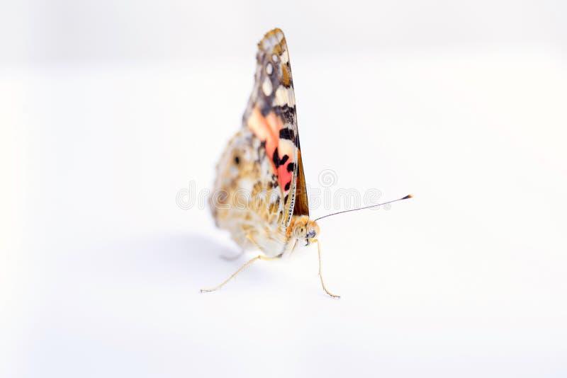 在白色背景的五颜六色的蝴蝶 拷贝空间 免版税图库摄影