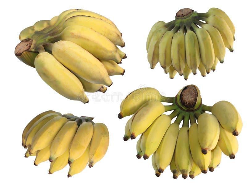在白色背景的亚洲香蕉 免版税库存图片