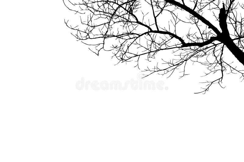在白色背景的例证光秃的树剪影 免版税库存图片