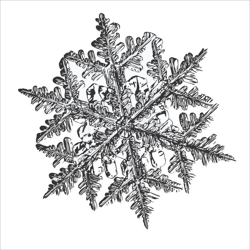 在白色背景的典雅的雪花 向量例证
