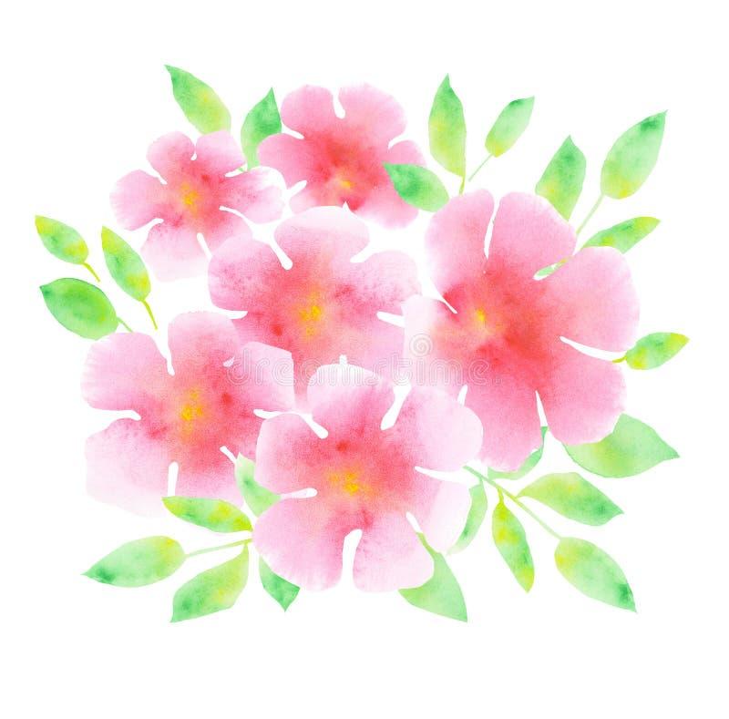 在白色背景的典雅的轻的玫瑰色开花 库存例证