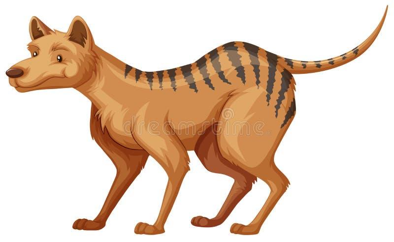 在白色背景的塔斯马尼亚的老虎 皇族释放例证
