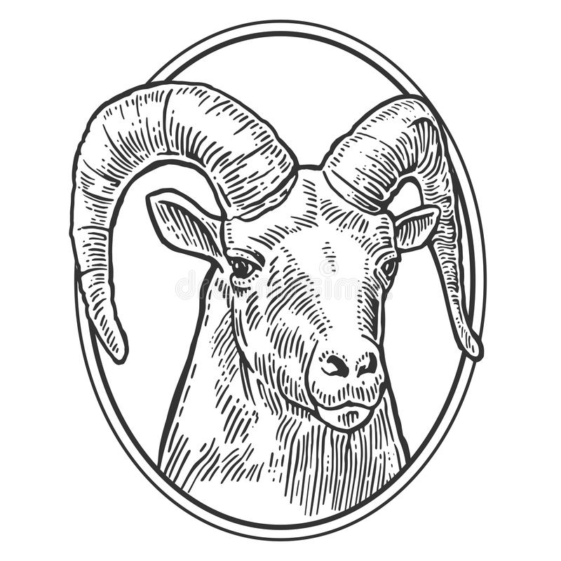 在白色背景的山羊头 向量例证