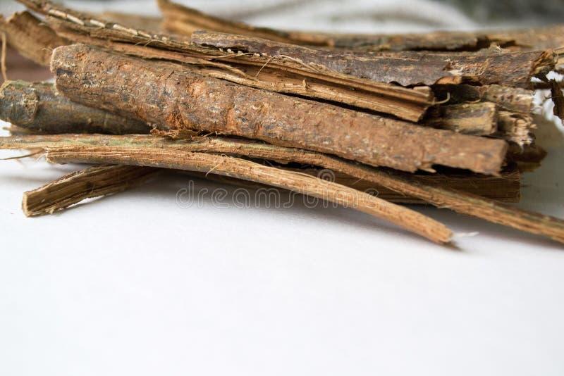 在白色背景的干燥橡木吠声 栎属外皮 栎属robur 免版税库存图片