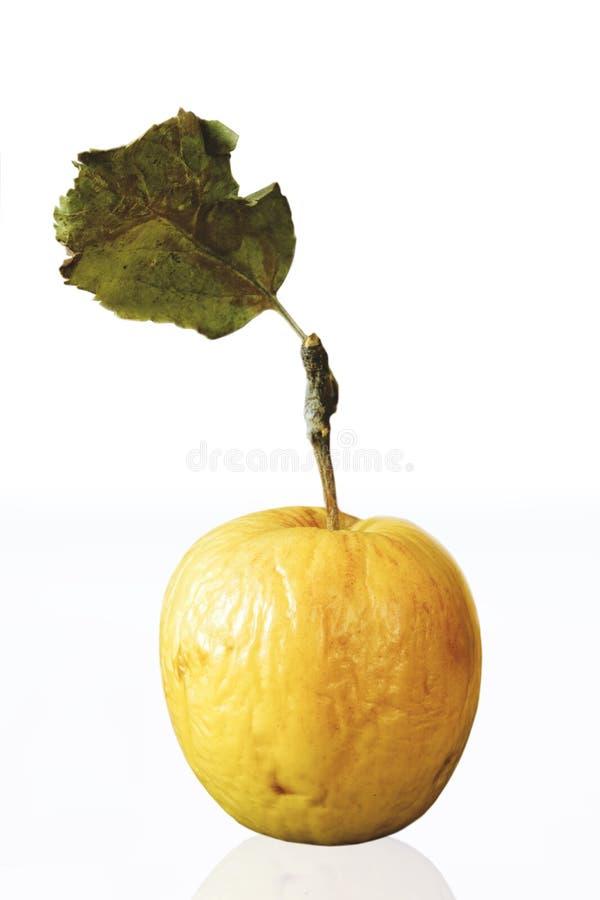 在白色背景的干苹果 图库摄影