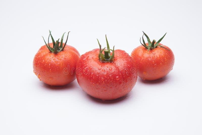 在白色背景的成熟蕃茄 免版税库存照片