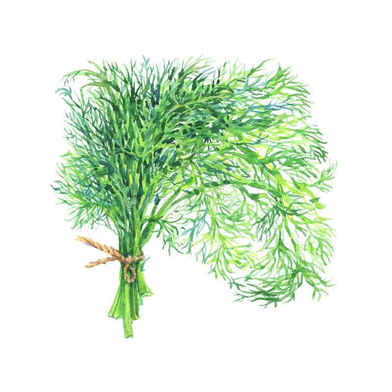 在白色背景的手拉的莳萝 水彩被隔绝的新鲜的绿叶 皇族释放例证