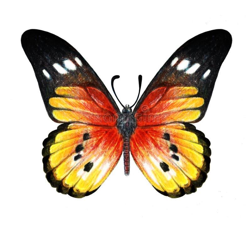 在白色背景的手拉的蝴蝶 库存图片