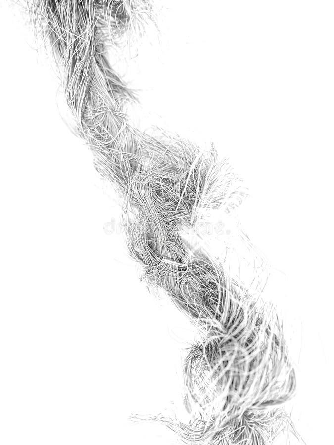 在白色背景的抽象曲线 库存图片