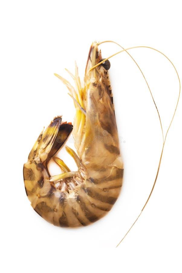 在白色背景的新鲜的未加工的老虎虾 免版税库存图片