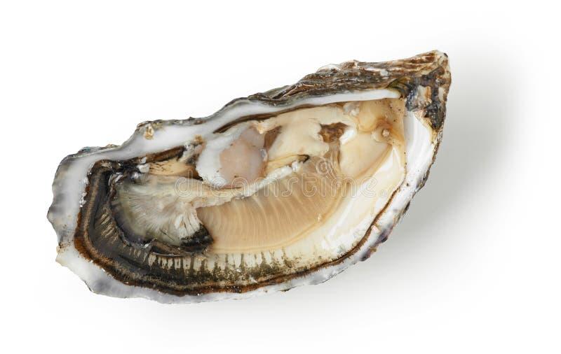 在白色背景的新鲜的牡蛎 免版税库存照片