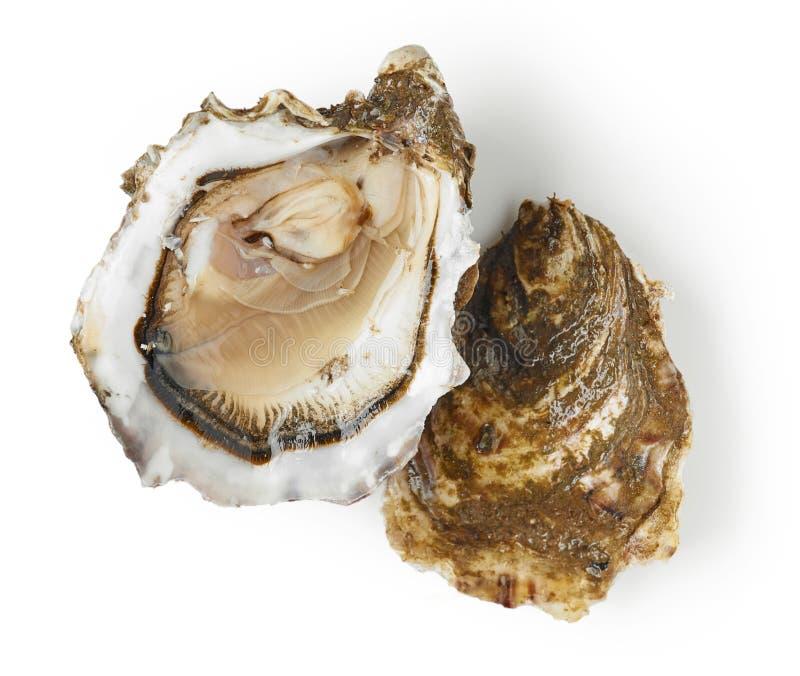 在白色背景的新鲜的牡蛎 库存图片