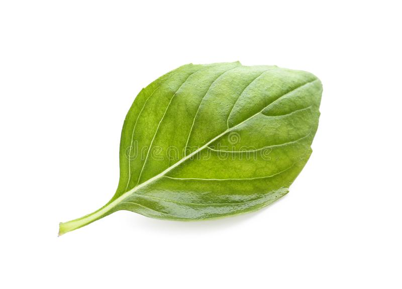 在白色背景的新鲜的绿色蓬蒿叶子 库存图片