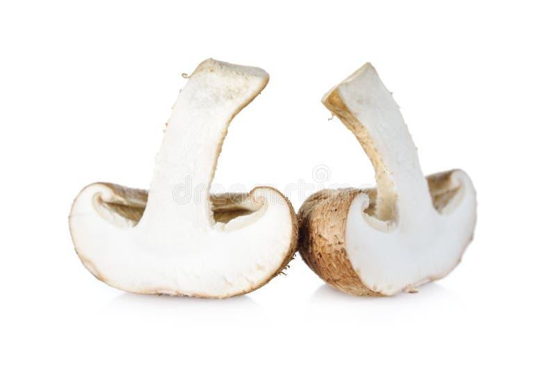 在白色背景的新鲜的什塔克菇 库存图片